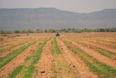 Поле сахарного тростника Стоковая Фотография RF