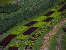 Поле салата, южный Тироль, Италия, Европа стоковые изображения