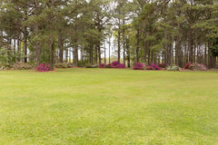 Поле сада Стоковые Фото