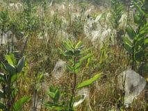 Поле сетей паука Стоковая Фотография RF