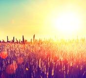Поле. Сельский ландшафт Стоковые Изображения