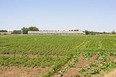 поле сельское Стоковые Фотографии RF