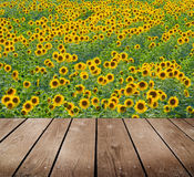 Поле солнцецвета и пустая деревянная таблица палубы. стоковая фотография rf