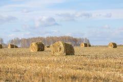 Поле с вкосую сеном Стоковые Фото