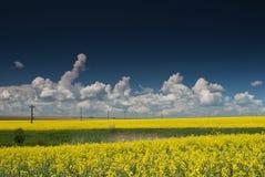 Поле с голубым небом и белыми облаками стоковое изображение rf