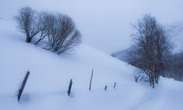 Поле с деревьями в зиме Стоковые Изображения