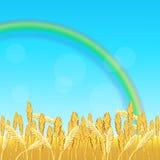 Поле с желтыми пшеницей и радугой бесплатная иллюстрация
