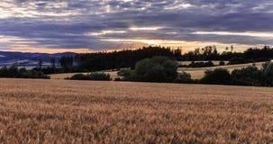 Поле с зерном и заходом солнца Стоковая Фотография RF