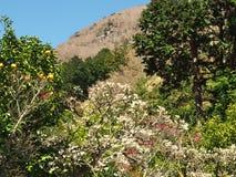 Поле сливы на Mt Парк Maku Стоковое Изображение RF