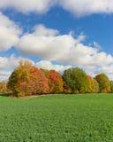 Поле с предпосылкой леса осени падения и пасмурным голубым небом Стоковое фото RF