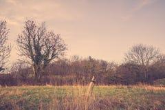 Поле с старым столбом загородки Стоковые Изображения