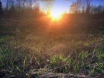 Поле с травой вянуть last year Стоковая Фотография
