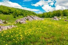 Поле с цветками Стоковое фото RF