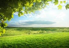 Поле травы весны Стоковые Фото