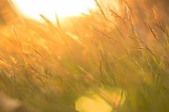 Поле травы золота Стоковое фото RF