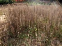 Поле травы осени Стоковая Фотография