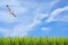 Поле травы под небом и летящей птицей Стоковые Изображения RF