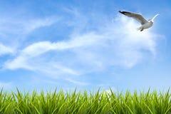 Поле травы под небом и летящей птицей Стоковые Изображения