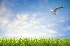Поле травы под небом и летящей птицей Стоковое фото RF