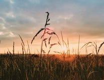 Поле травы с солнцем в задней части Стоковое Фото