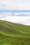 Поле травы с туманом Стоковое Изображение