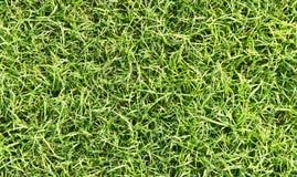 Поле травы Стоковые Фотографии RF