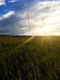 поле травянистое Стоковая Фотография RF