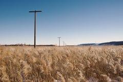Поле тростника в феврале Стоковое фото RF