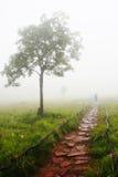 Поле тюльпана Сиама с сиротливым деревом Стоковое фото RF