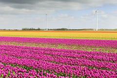 Поле тюльпана с другими цветами Стоковое фото RF
