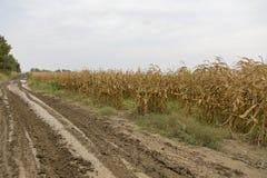 Поле урожая Стоковое фото RF