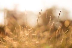 Поле урожая Стоковая Фотография RF