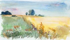 Поле утра лета бесплатная иллюстрация