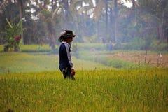 поле фарфора имеет juli изображений I мое yangshou работника риса портфолио изображения подобное принятое Стоковая Фотография RF