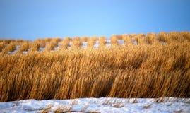 Поле фермы в зиме 2 стоковая фотография