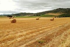 поле фермы открытое Стоковая Фотография