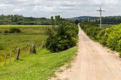 Поле фермы с коровами Стоковые Изображения RF