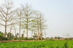 Поле фермы Стоковые Изображения RF