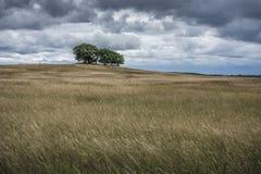 поле холмистое Стоковая Фотография RF