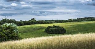 поле холмистое Стоковая Фотография