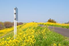 Поле цветений рапса и путь Стоковая Фотография RF