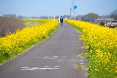 Поле цветений рапса Стоковое Фото