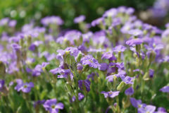 поле цветет пинк стоковое фото rf