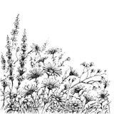 Поле цветет эскиз иллюстрация вектора