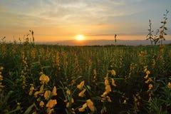 Поле цветка вечера Стоковая Фотография RF