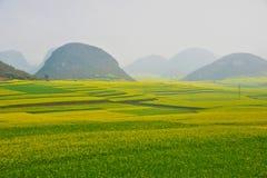 Поле цветка Коул, Китай стоковые фото