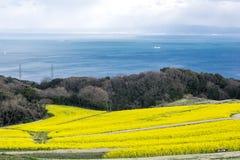 Поле цветка Коул Стоковые Фотографии RF