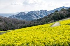 Поле цветка Коул Стоковая Фотография