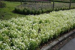 Поле цветка красивое Стоковая Фотография