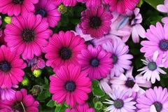 Поле цветка Стоковое Фото
